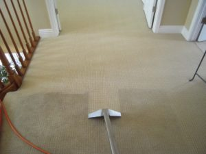 croydon carpet cleaning